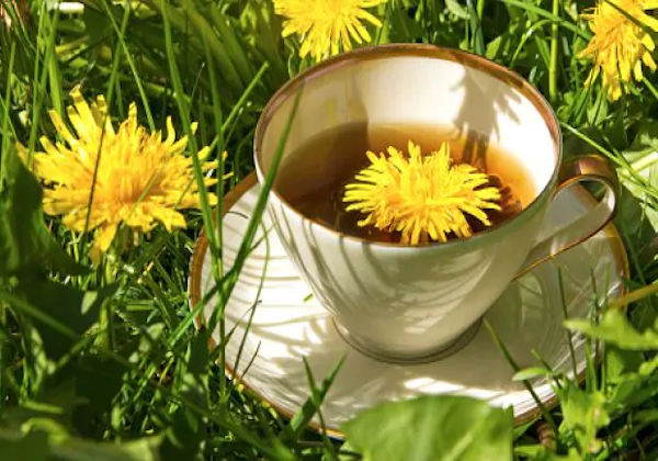 Dandelion Tea Helps Improve Your Liver Function, Digestion and More  Dandelion-tea