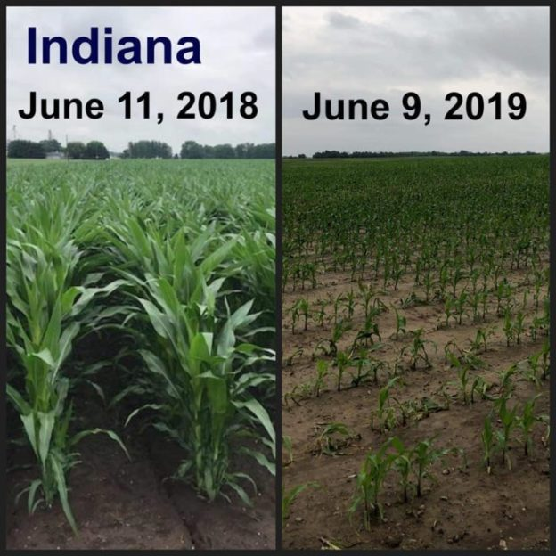 Shocking Before And After Photos Reveal The Truth About The Widespread Crop Failures The U.S. Is Facing In 2019  Td-hale-1-700x700