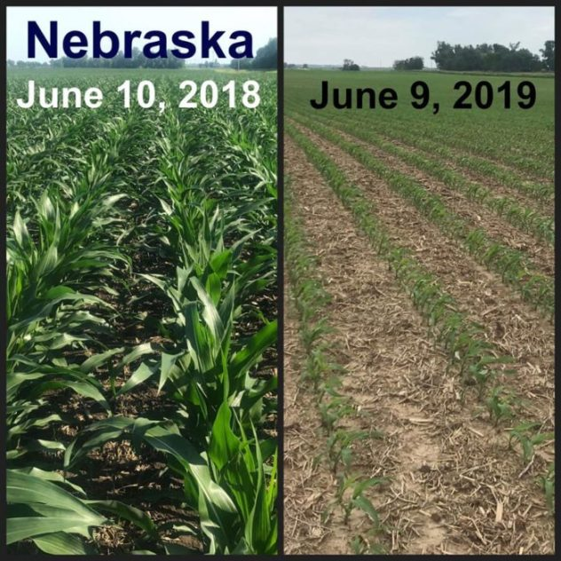 Shocking Before And After Photos Reveal The Truth About The Widespread Crop Failures The U.S. Is Facing In 2019  Td-hale-2-700x700