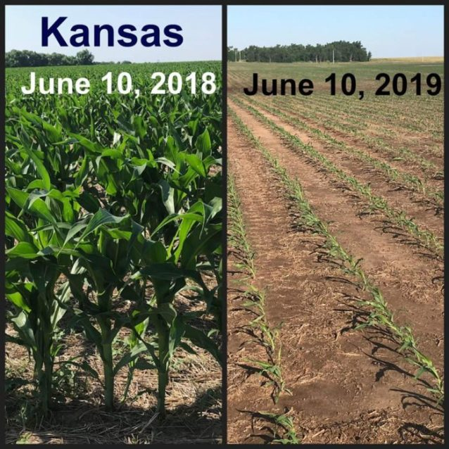 Shocking Before And After Photos Reveal The Truth About The Widespread Crop Failures The U.S. Is Facing In 2019  Td-hale-3-700x700
