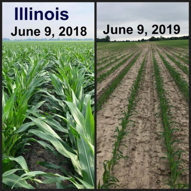 Shocking Before And After Photos Reveal The Truth About The Widespread Crop Failures The U.S. Is Facing In 2019  Td-hale-4-700x700