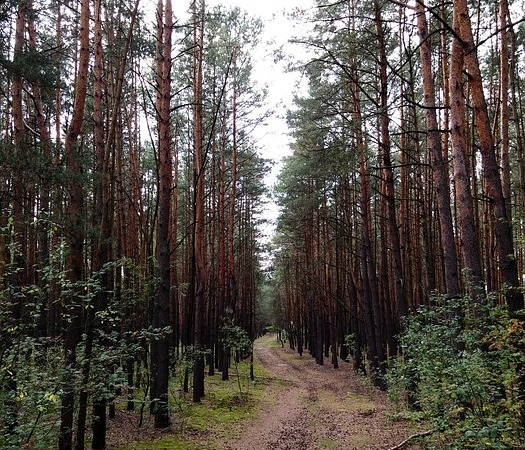 path-journey
