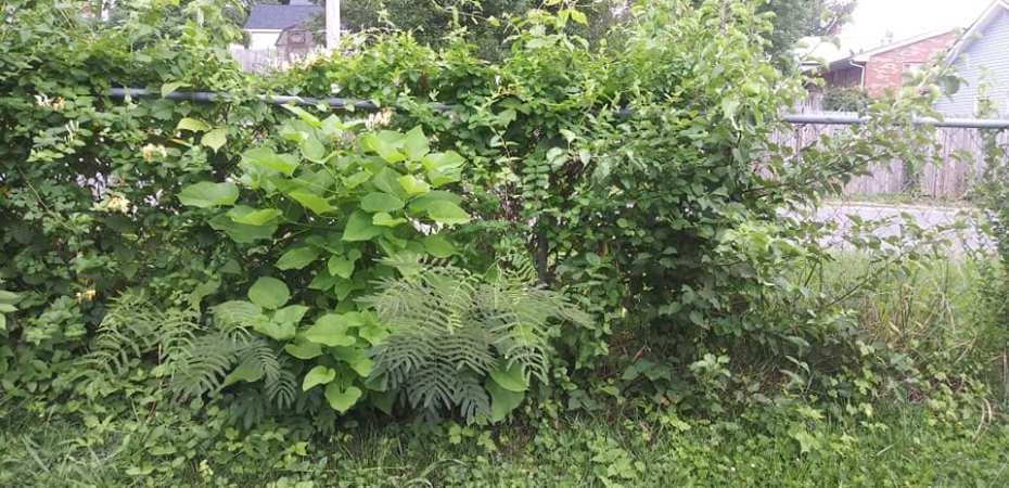 overgrowth-nature